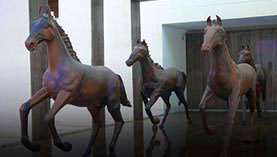 Horses at DS Group's Office